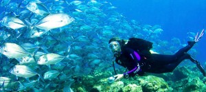 Cayo Guillermo Diving Green Moray