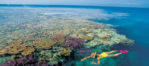 Cayo Guillermo Snorkeling
