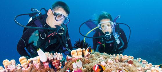 Cuba-cayo-guillermo-diving